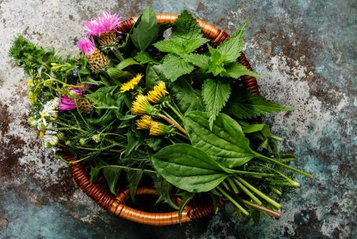Meadow and Medicinal herbs for clean eating biohacking paleo diet